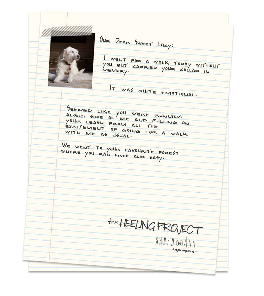 healing project pet loss support dog loss letter project pet loss
