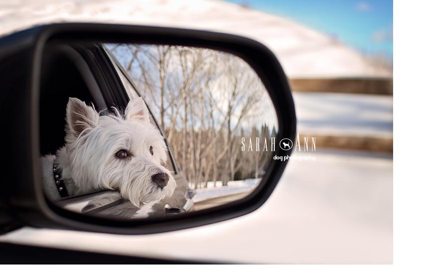 dog-car-mirror-photo-canadian-pet-condolence-cards-healing-pet-project-bereavement-photos-dogs
