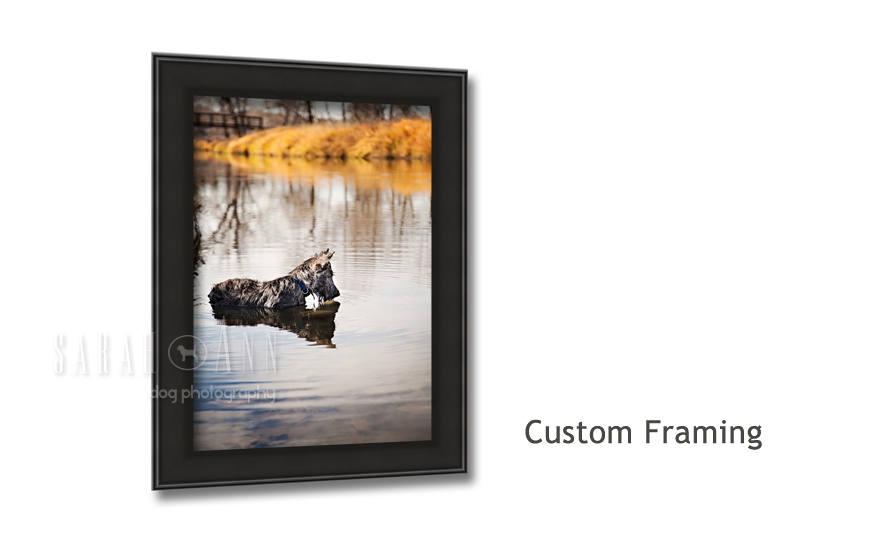 custom-framed-pet-print-vet-clinic-decor