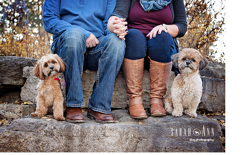 dogs-and-people-feet-image-little-dogs-sitting-on-rock-family-photo