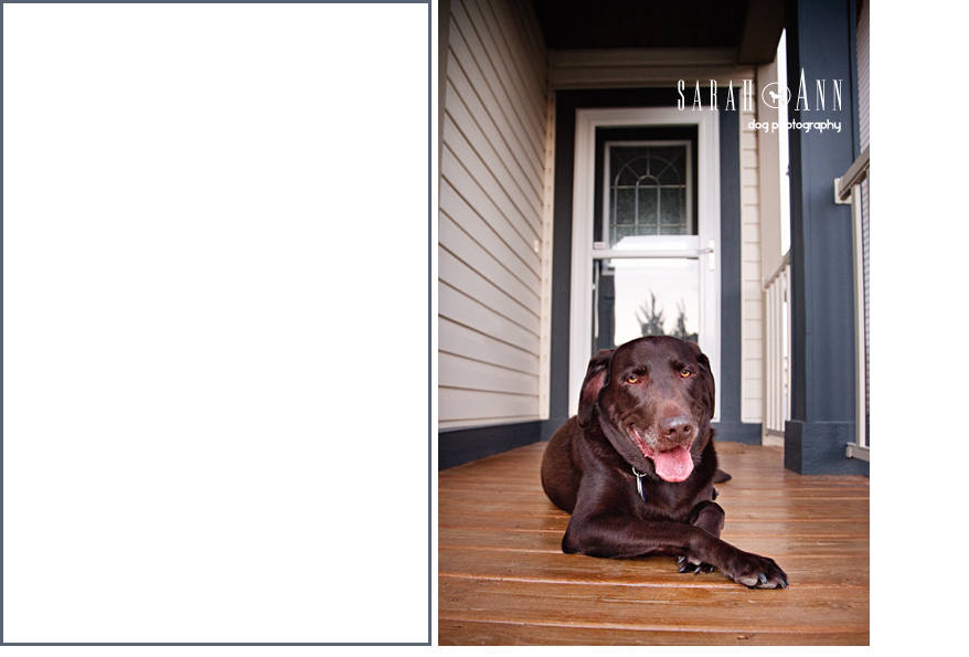brown-lab-portrait-dog-laying-on-porch-stoop-smiling-sarahanndogphotography