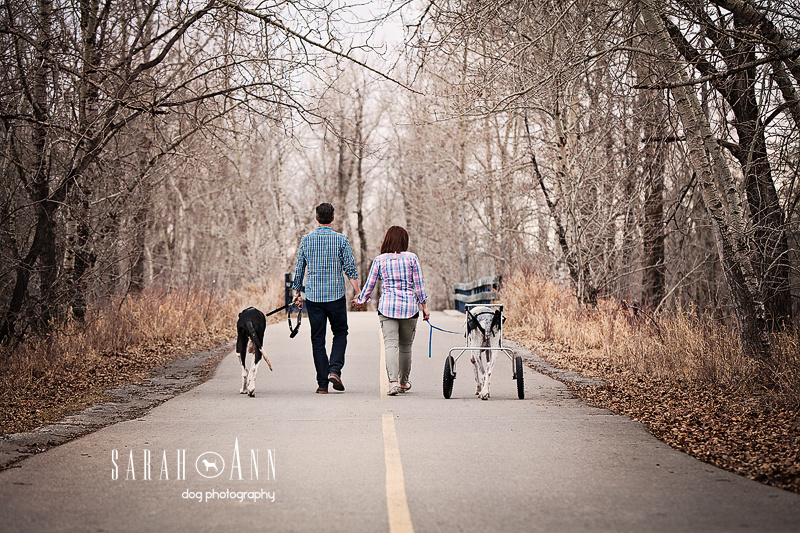 Casting Call Calgary,  Dogs And Cats With Wheels, couple walking dogs, great danes