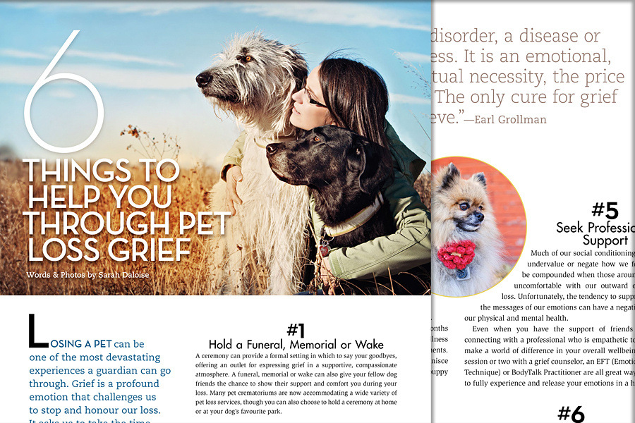 pet_loss_tips_modern_dog_magazine_dog_photographer_SarahAnn_dog_photography_Pet Loss Grief | Modern Dog Magazine June 2015
