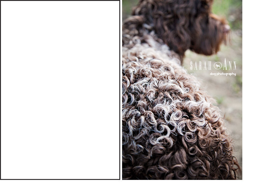 curly hair dog pic, dog loss project canada, pet bereavement project, published pet photographers