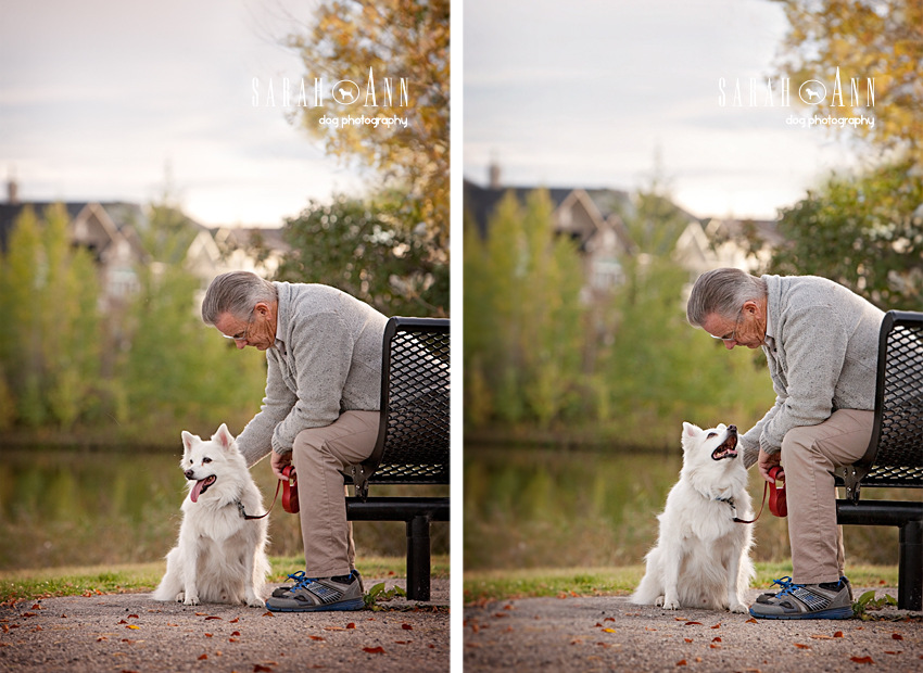 eskie-dog-with-owner-senior_ man_ with_ dog_ park_ bench_SarahAnn-Dog-Photography