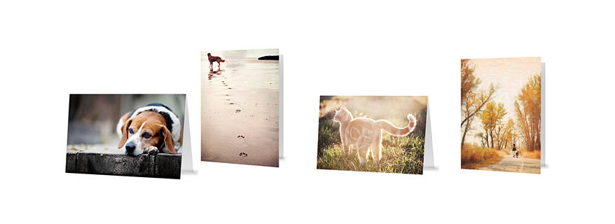 pet-greeting-cards-canada, heeling-cards-pet-photo-cards-veterinary-wholesale-cards