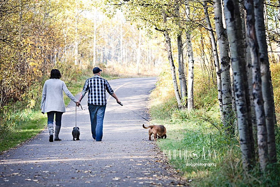 photo_couple_walking_two_dogs_away-people-with-dogs-pet-photos-alberta-canada
