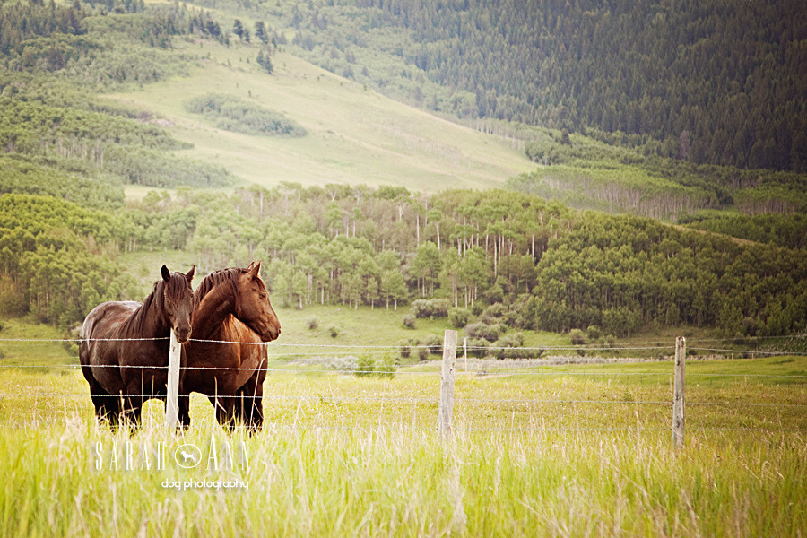 two-horses-standing-in-field-alberta-horses-pet-equine-photography-animal-photos-canada