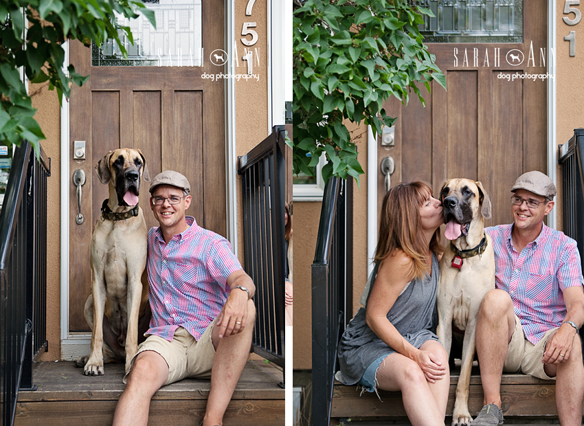 dog families calgary dog parents great danes
