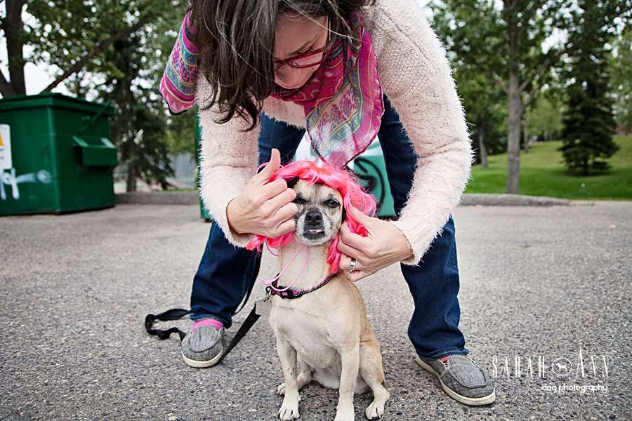 dog-in-pink-wig-dress-up-dog-costume-halloween-Confessions of a Dog Photographer