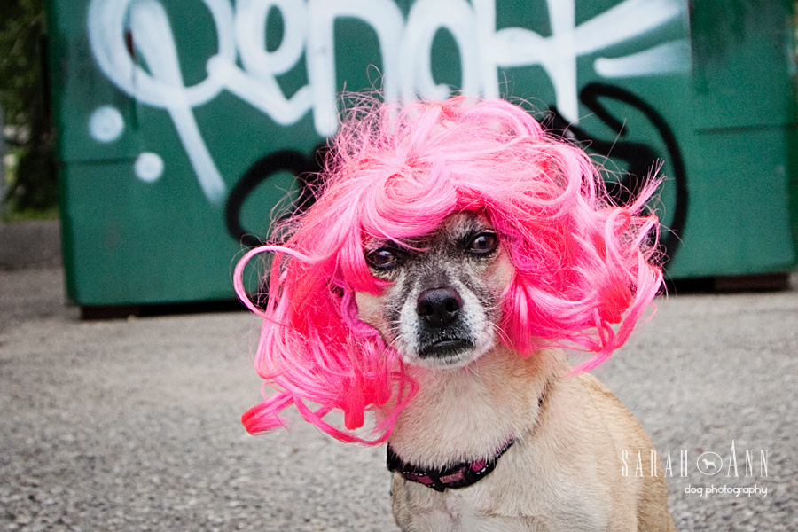 dog-wearing-pink-wig-halloween-urban-dog-photography-pet-photos-city-Confessions of a Dog Photographer