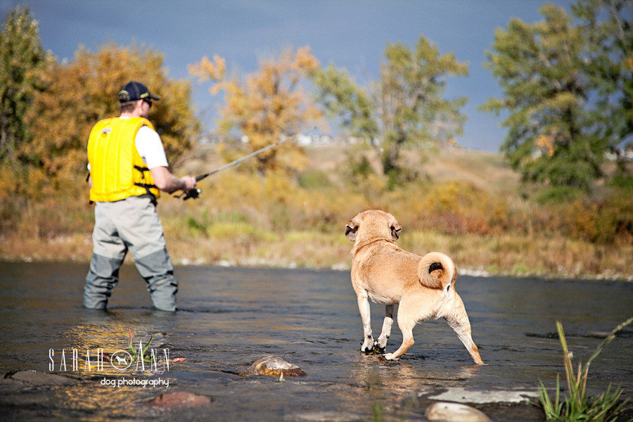 calgary-puggle-dog-image-dog -fishing - bow-river -man-fishing-with -dog