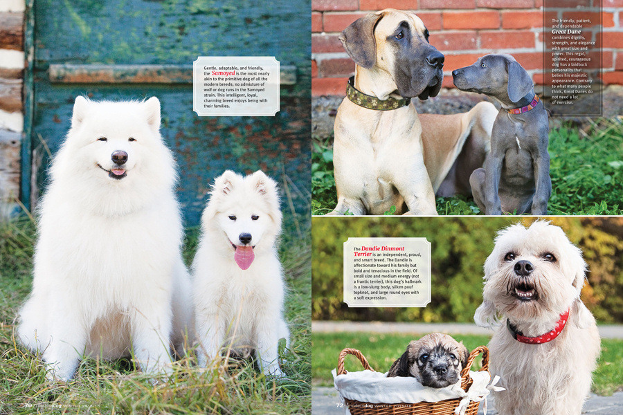 samoyed-huskies-dandie-dinmont-great-dane-dogs-calgary-Modern-Dog-Magazine-feature