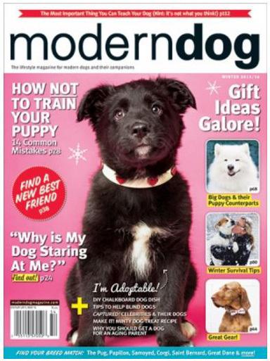 modern dog magazine December cover, Calgary dogs, casting calls