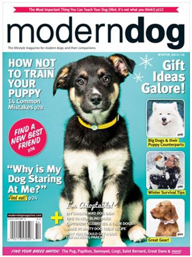calgary dog photography, modern dog mag december 2015, YYC dog photos