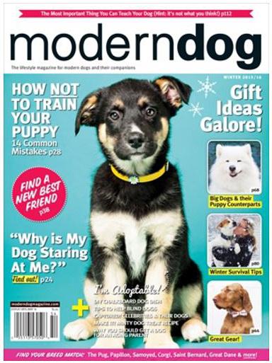 calgary dog photography, modern dog mag december 2015, YYC dog photos