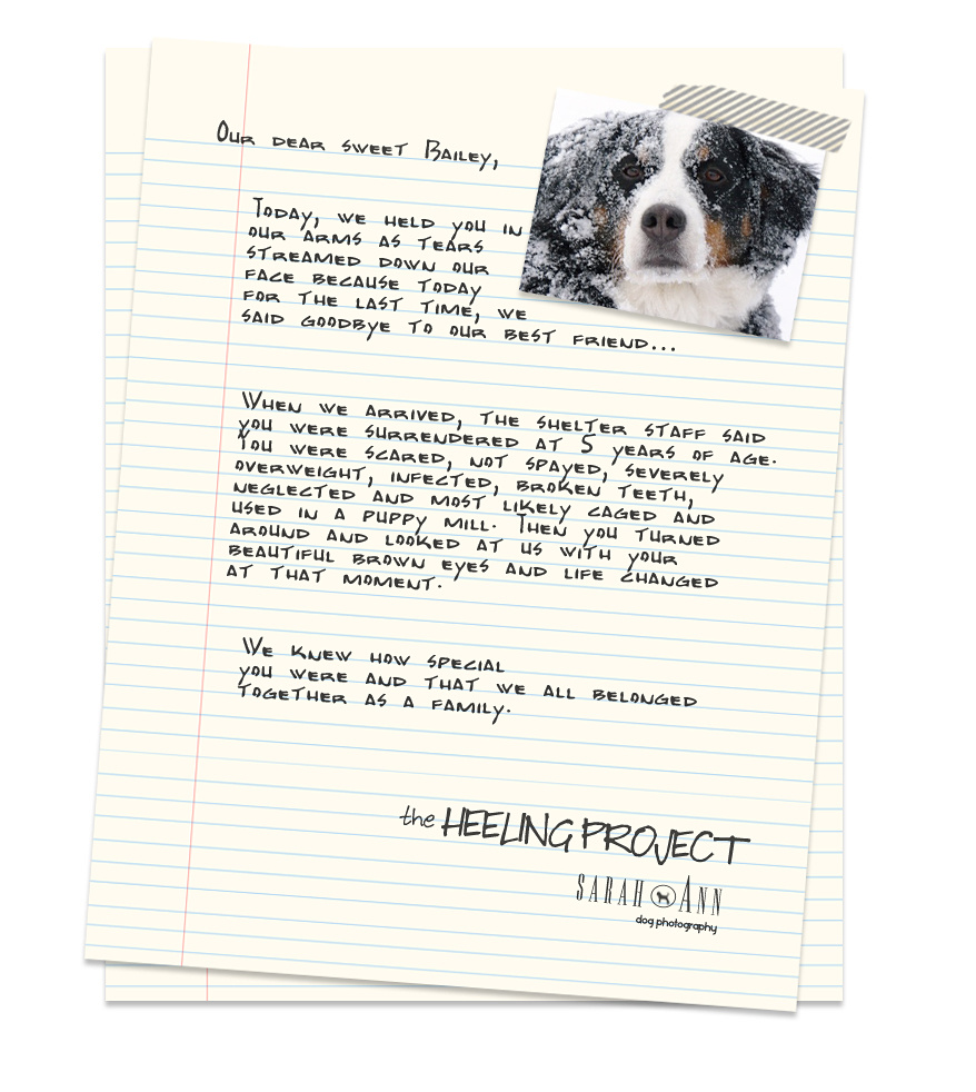 Pet Loss Letters Heeling Project Canadian Dog