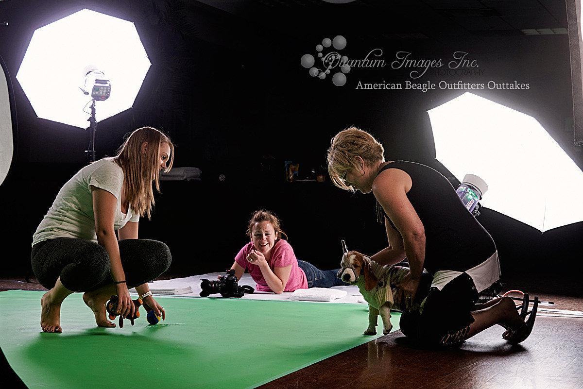 american-eagle-beagle -shoot-sarahann-dog-photography-beagle-puppies
