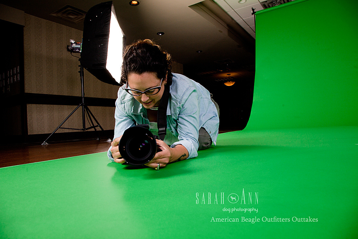 julie-american-beagle-shoot-outtakes-green-screen