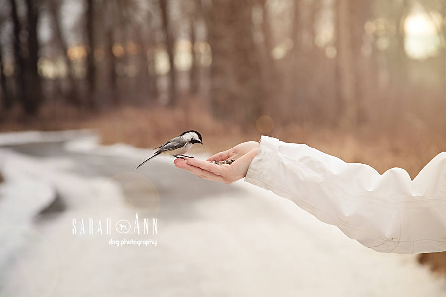 photo-bird-in-palm-of-hand-pet-photographer-calgary