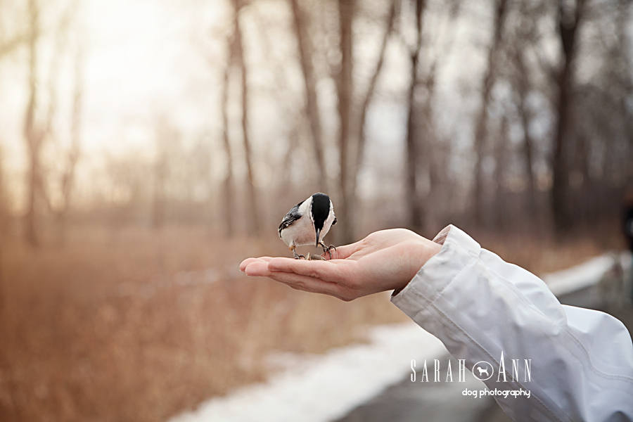 photo-bird-in-palm-of-hand-pet-photography-calgary-canada