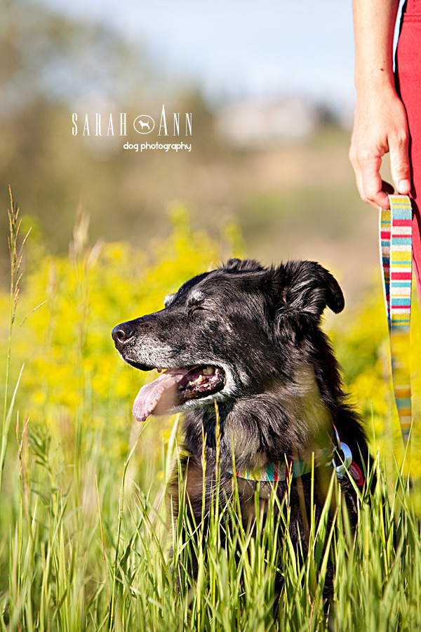 image-back-dog-smiling-in-sunshine-calgary-dog-photographer-canada