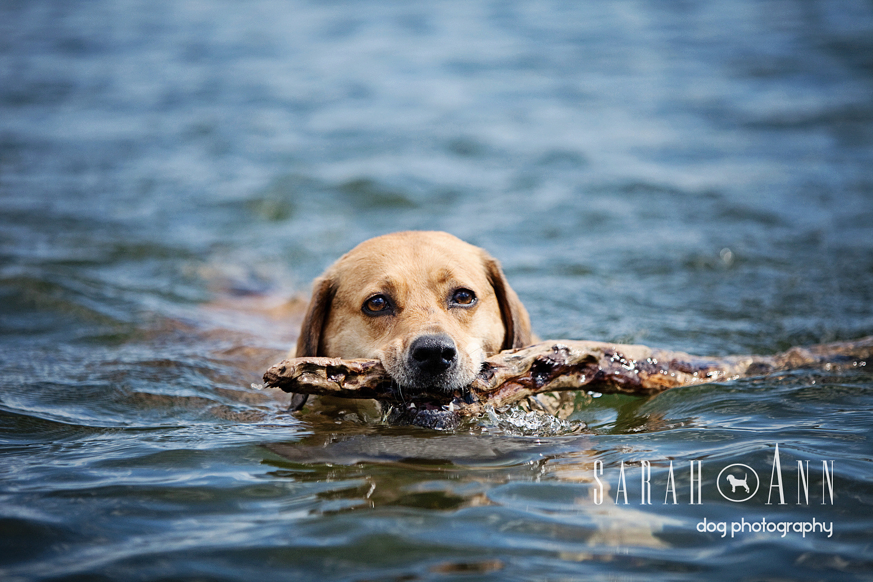 dogs_water_swimming_image_pet_photography_canada