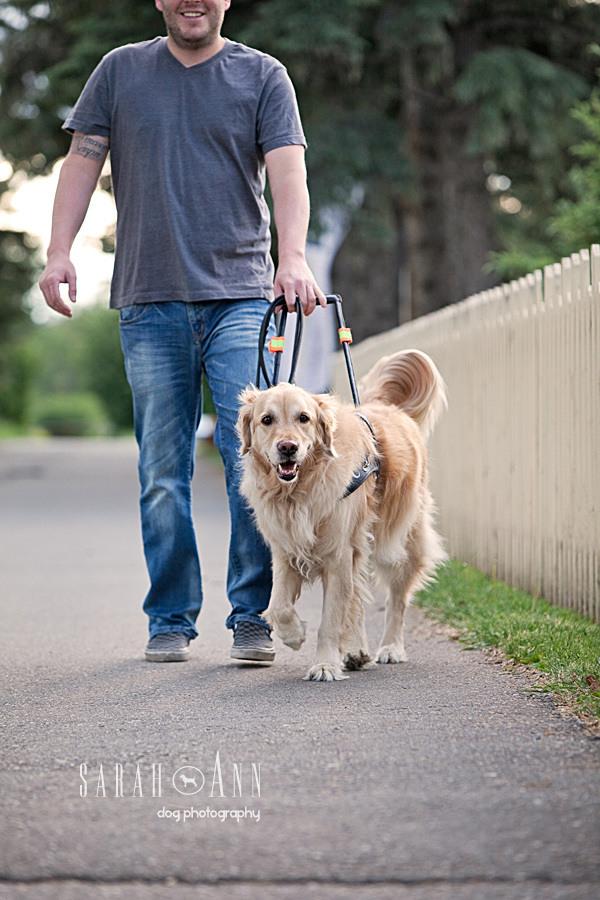 cvc-lions-guide-dog-calgary-jose_dog_imagery_pet_photographer_calgary