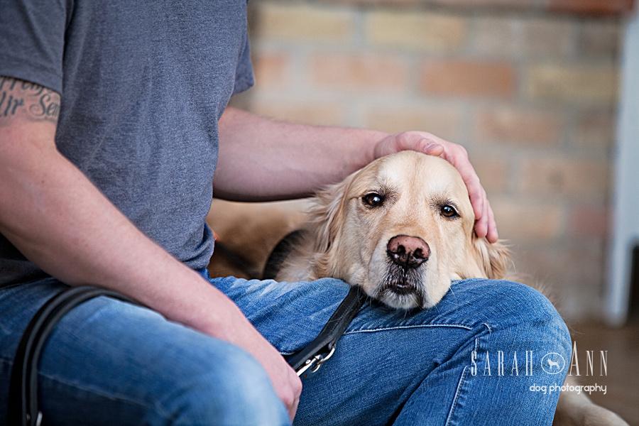 golden retriever guide dog_jose_neto_dog_pets_photos_canada_calgary