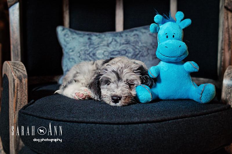 calgary_dog_photographer_pet_photos