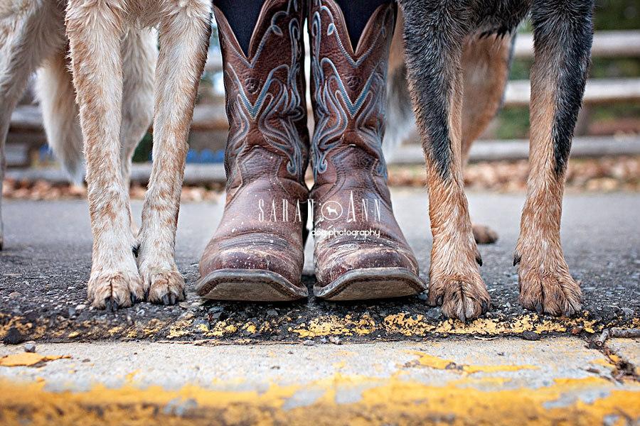 Sample Session Gallery - SarahAnn Dog PhotographySarahAnn Dog