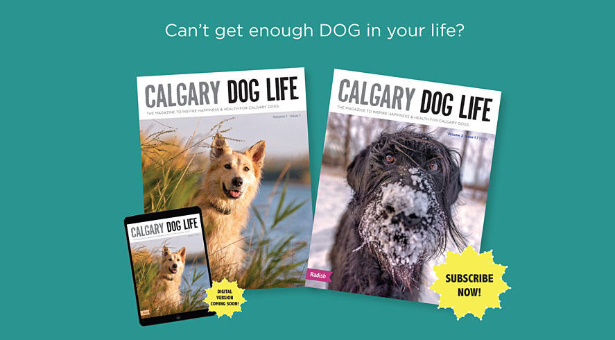covers of calgary dog magazine