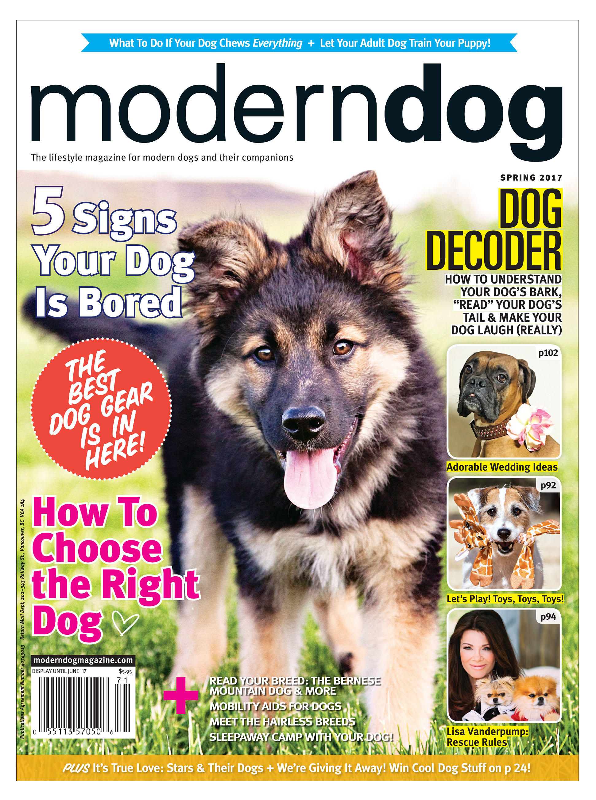 Calgary puppy on cover of Modern Dog Magazine