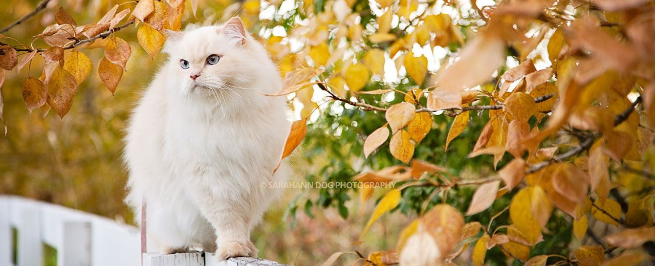 White-cat-on-fence-image-SarahAnn-Dog-Photography