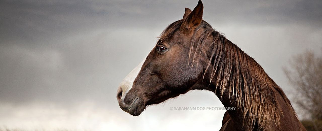 equine-portraits-SarahAnn-Dog-Photography