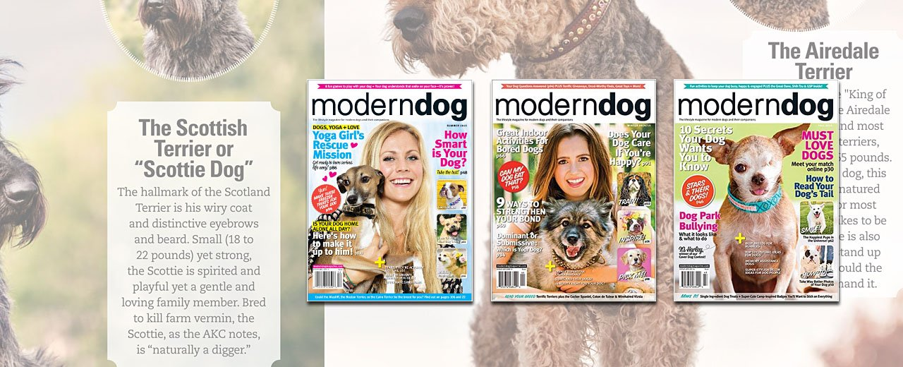 modern-dog-magazine-spread_2