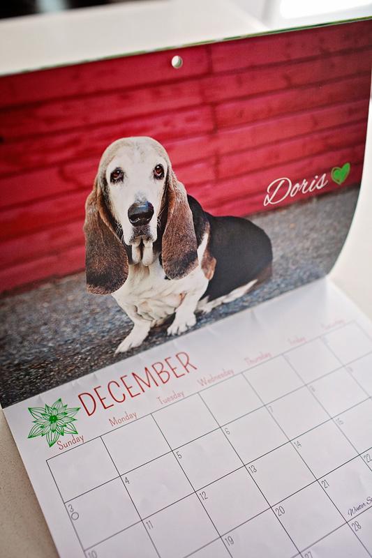 basset hound calgary basset rescue calendar 2017