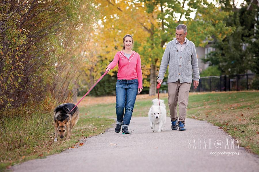 dog walks calgary pet photography