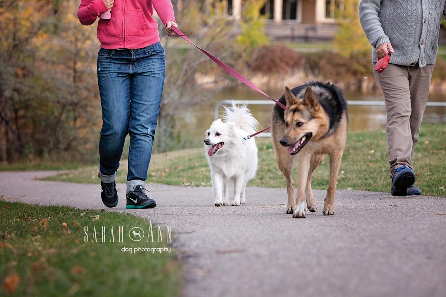 dog walks pet photographer calgary canada